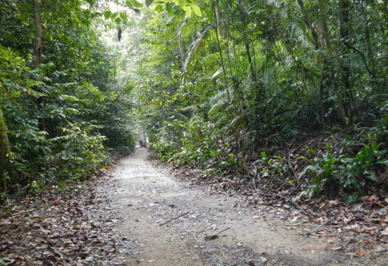 Jogging Paths In Singapore Not To Be Missed, Part 1