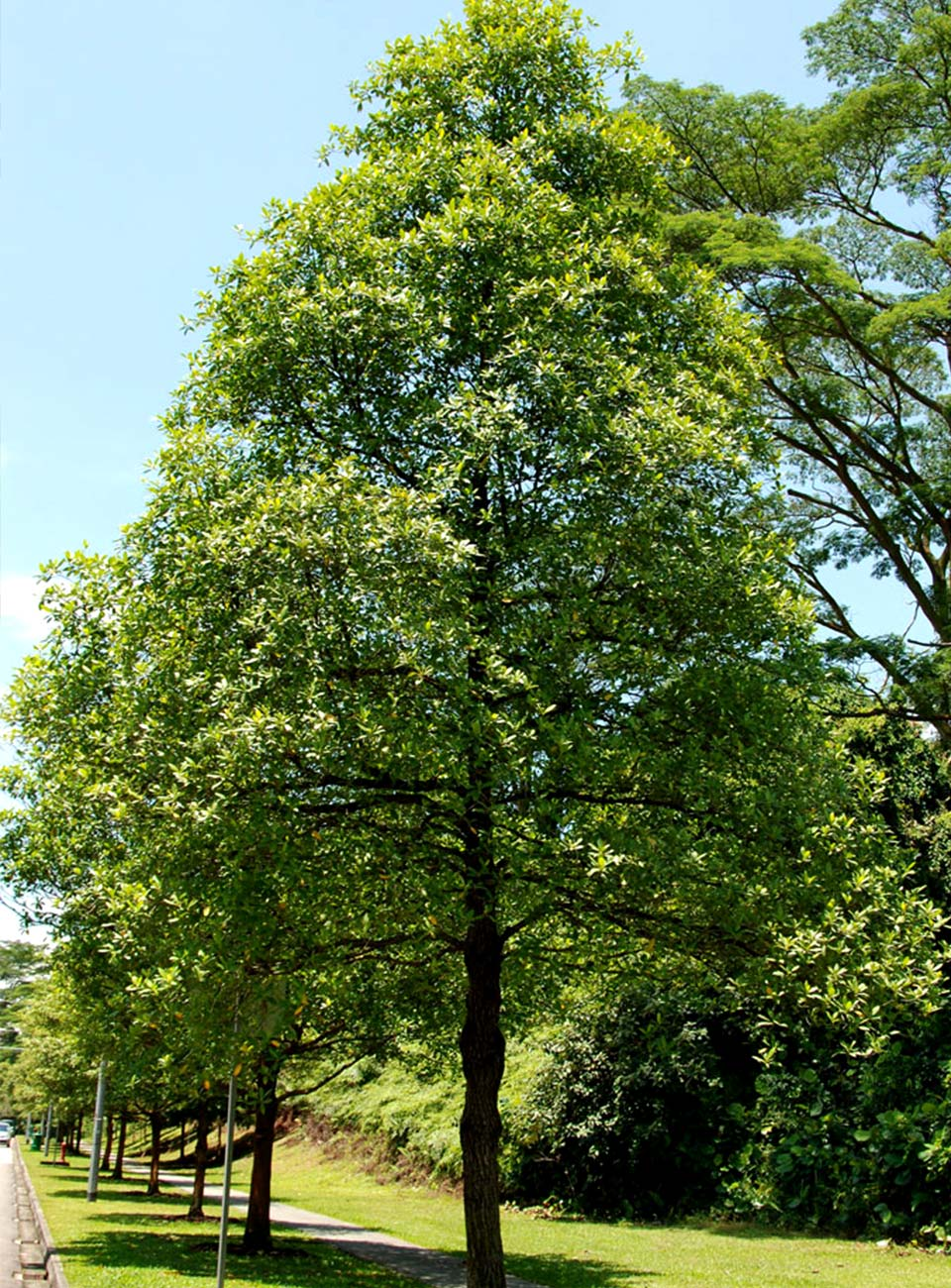 The Sea of Trees - Wikipedia
