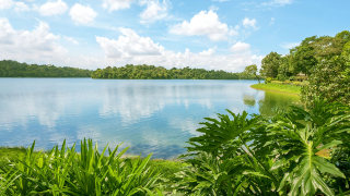 Singapore's Nature Reserves Everyone Should Explore