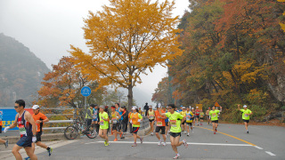 Video: Chosun Ilbo Chuncheon International Marathon 2014, Running in Autumn Foliage