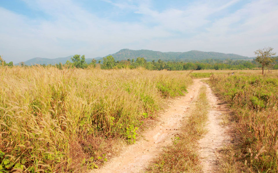 Trail Running is Hot in Thailand: Where to Go?