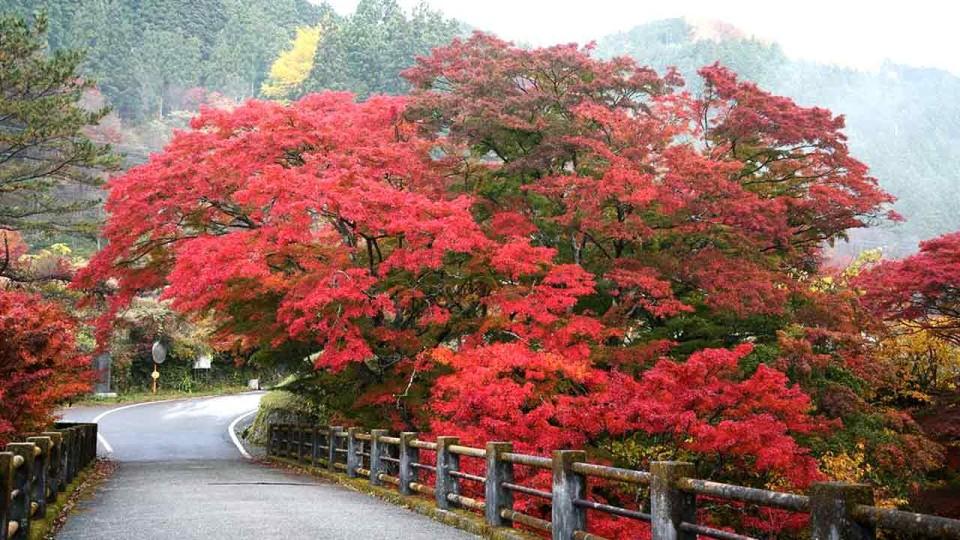 Kanuma Satsuki Marathon: Feel the Summer Breeze and the Kanuma Hospitality