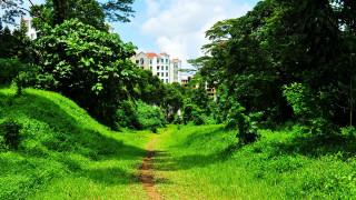 Trail Running in Singapore – Return to Nature
