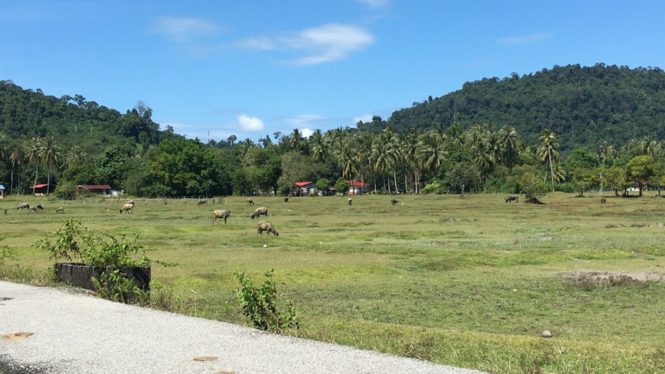 Pulau Trail Route Animals Encounter