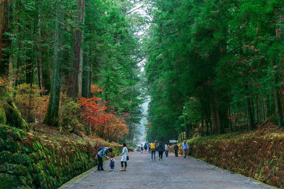 Improve Your Brain and Body Running the First-Ever Nikko 100km Ultramarathon, Japan