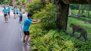 Safari Zoo Run 2017 Raises $100,000 For Wildlife Conservation