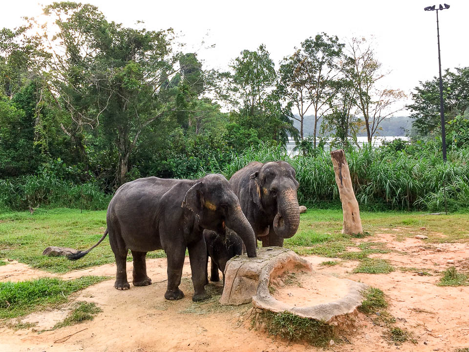 Safari Zoo Run 2017 Race Review