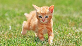 Will You Paws to Send All Cats a Running Valentine?